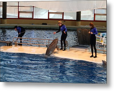 Dolphin Show - National Aquarium In Baltimore Md - 121231 Metal Print by DC Photographer