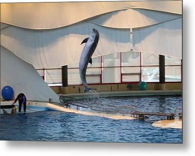 Dolphin Show - National Aquarium In Baltimore Md - 121254 Metal Print by DC Photographer