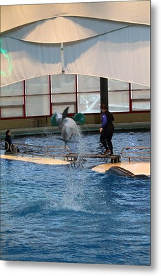 Dolphin Show - National Aquarium In Baltimore Md - 121267 Metal Print by DC Photographer