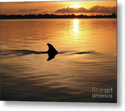 Dolphin Sunrise Metal Print by Fred Benavidez