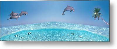 Dolphins Leaping In Air Metal Print by Panoramic Images