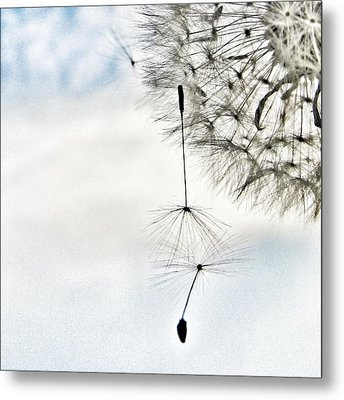 Don't Let Me Fall Metal Print by Marianna Mills