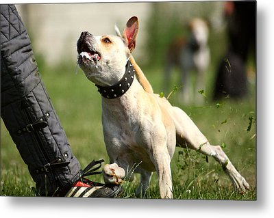 Dont You Dare To Move Metal Print by Charlie Photographer