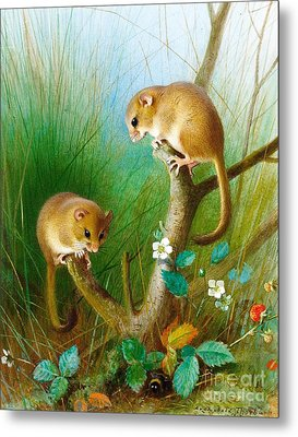 Dormice Metal Print by Pg Reproductions
