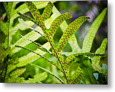 Dotty Metal Print by Christi Kraft