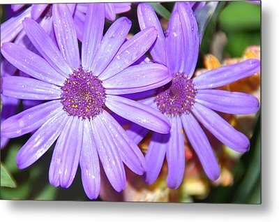 Double Purple Metal Print by Aimee L Maher Photography and Art Visit ALMGallerydotcom