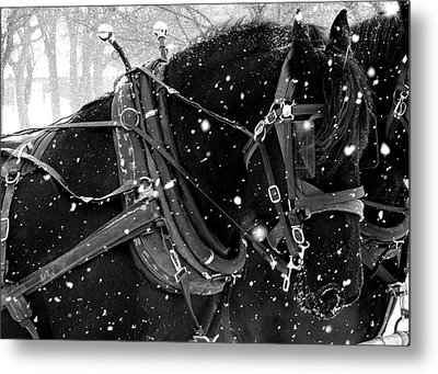 Draft Horses In The Snow Photograph By Megan Luschen