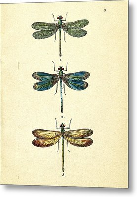 Dragonflies Metal Print by Pati Photography