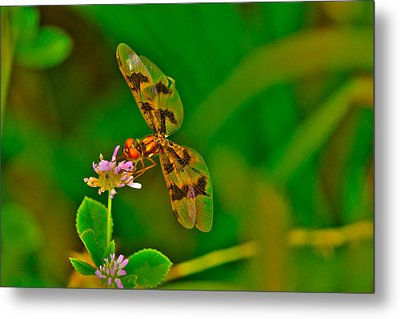 Dragonfly And Flower Metal Print by Lorri Crossno