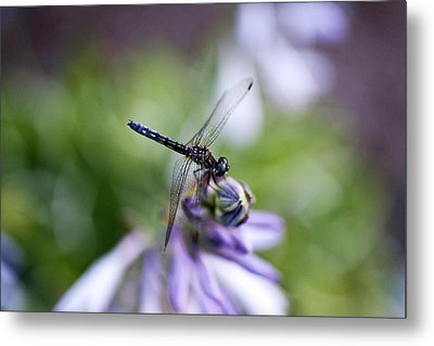 Dragonfly Metal Print by Christopher McPhail