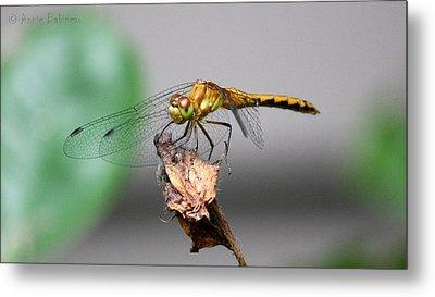 Dragonfly Dame Metal Print by Anne Babineau
