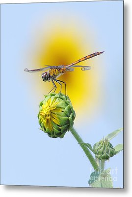 Dragonfly In Sunflowers Metal Print by Robert Frederick
