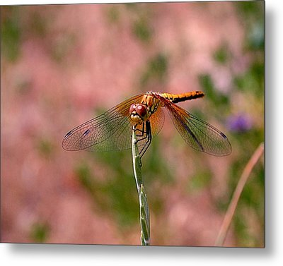 Dragonfly Metal Print by Rona Black