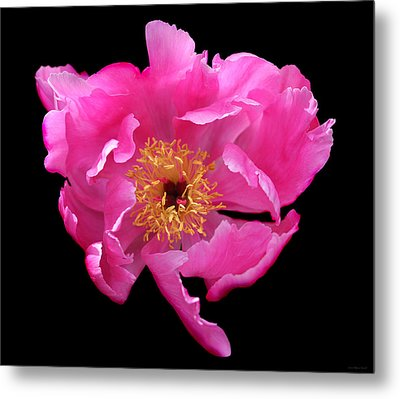 Dramatic Hot Pink Peony Flower Metal Print by Jennie Marie Schell