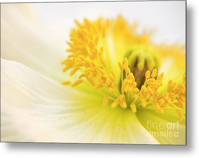 Dreaming Poppy Metal Print by Angela Doelling AD DESIGN Photo and PhotoArt