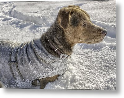 Dressed For The Snow Metal Print by Jason Politte