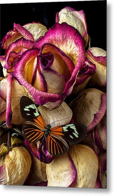 Dried Rose And Butterfly Metal Print by Garry Gay