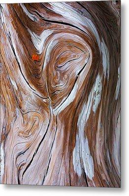 Driftwood 6 Metal Print by Bill Caldwell -        ABeautifulSky Photography
