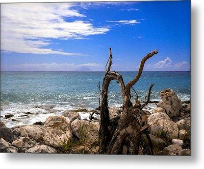 Driftwood Island Metal Print by Karen Wiles