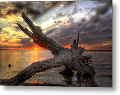 Driftwood Sunset Metal Print by Greg and Chrystal Mimbs