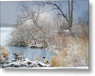 Ducks By The Pond Metal Print by Mary Timman