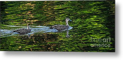 Ducks On Green Reflections - Panorama Metal Print by Kaye Menner