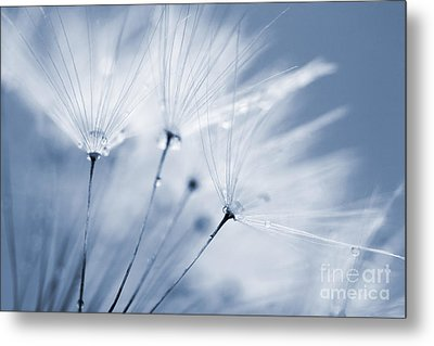Dusty Blue Dandelion Clock And Water Droplets Metal Print by Natalie Kinnear