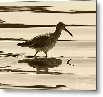 Early Morning In The Moss Landing Harbor Picture Of A Willet Metal Print by Artist and Photographer Laura Wrede
