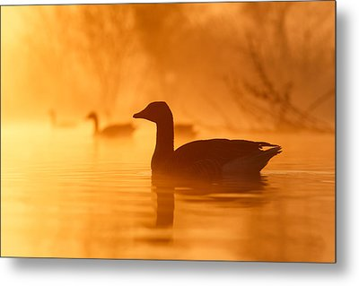 Early Morning Mood Metal Print by Roeselien Raimond