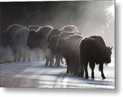 Early Morning Road Bison Metal Print by Bruce Gourley