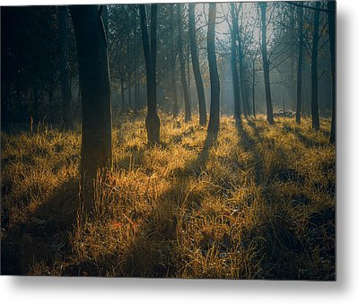 Early Morning Woodland Walk Metal Print by Chris Fletcher