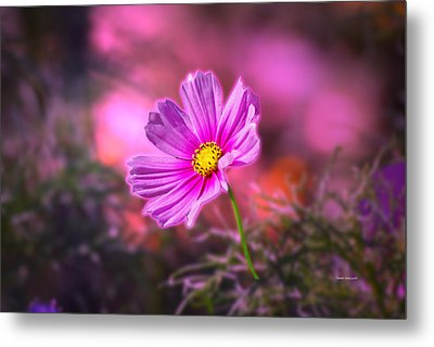 Early Sun Light Metal Print by Thomas Woolworth