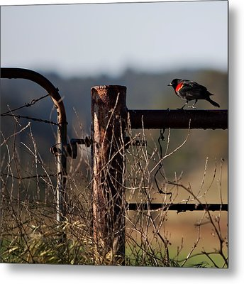 Eary Morning Blackbird Metal Print by Art Block Collections