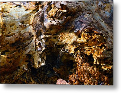 Eaten Wood Metal Print by Brent Dolliver