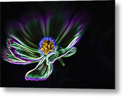 Electric Daisy Metal Print by Scott Campbell