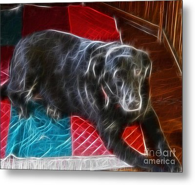 Electrostatic Dog And Blanket Metal Print by Barbara Griffin