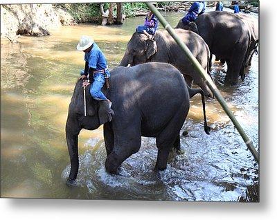 Elephant Baths - Maesa Elephant Camp - Chiang Mai Thailand - 01131 Metal Print by DC Photographer