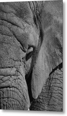 Elephant Bw Metal Print by Ernie Echols