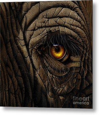 Elephant Eye Metal Print by Jurek Zamoyski