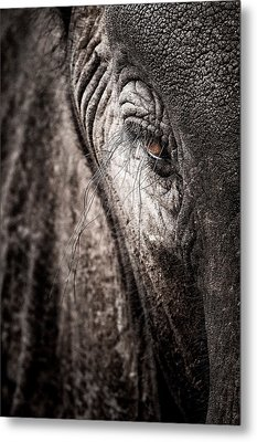 Elephant Eye Verical Metal Print by Mike Gaudaur