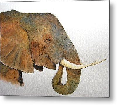 Elephant Head Study Metal Print by Juan  Bosco