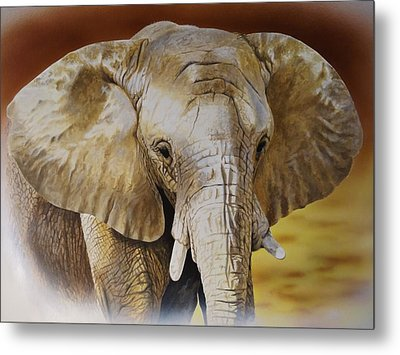 Elephant Metal Print by Julian Wheat