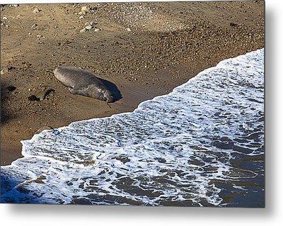 Elephant Seal Sunning On Beach Metal Print by Garry Gay