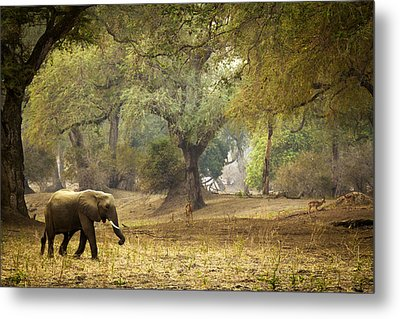 Elephant Strolling In Enchanted Forest Metal Print by Alison Buttigieg