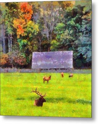 Elk In Cataloochee Valley Metal Print by Dan Sproul
