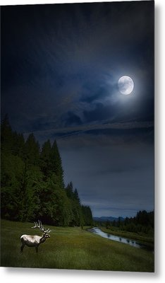 Elk Under A Full Moon Metal Print by Belinda Greb