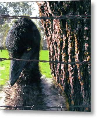 Emu Next To Tree Metal Print by Marcia Cary