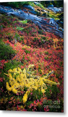 Enchanted Colors Metal Print by Inge Johnsson
