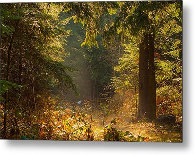 Enchanted Forest Metal Print by Evgeni Dinev