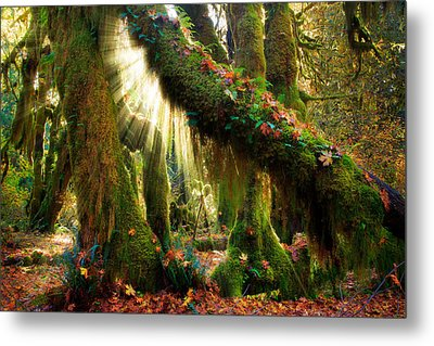 Enchanted Forest Metal Print by Inge Johnsson